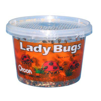 Lady Bugs For Sale