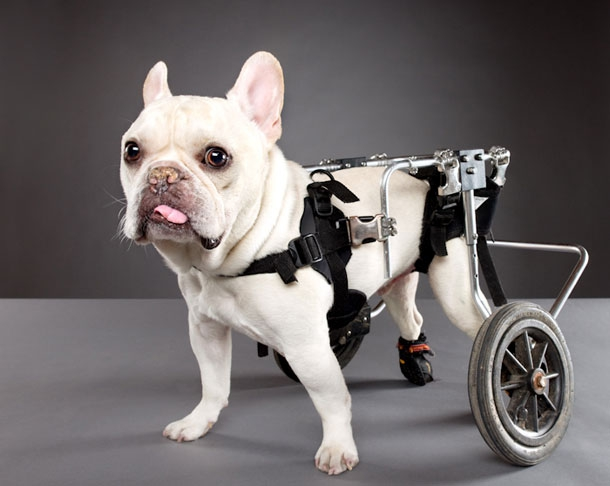 Pets With Disabilities