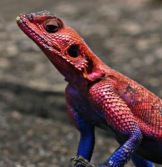 spiderman lizard Close Up