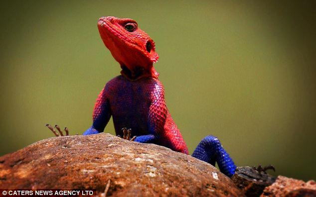 Awesome lizard
