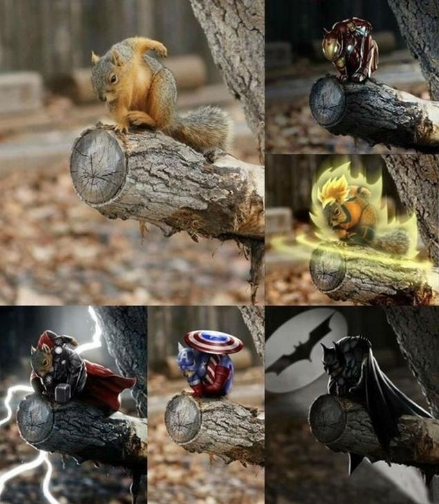 Powerful Squirrel