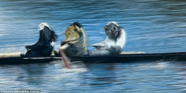 Guinea Pigs Rowing Team
