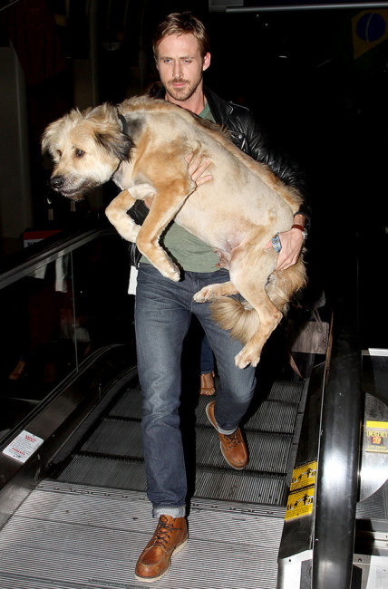 Ryan Gosling Carrying BIG Puppy