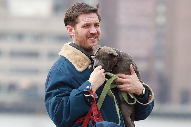 Tom Hardy with Pitbull Puppy