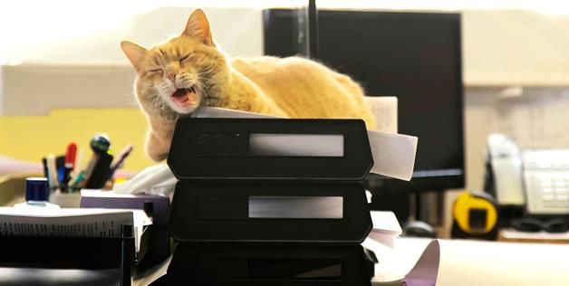 cat nap at work