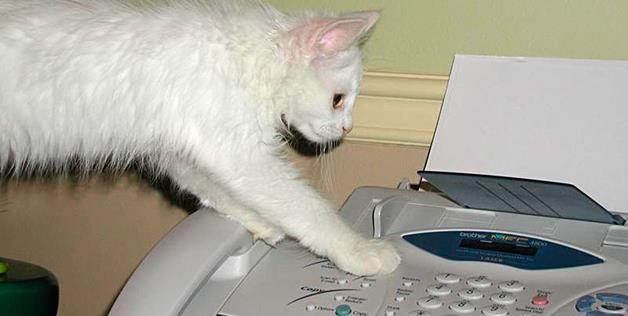 cat vs fax machine