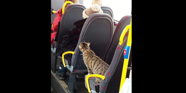 cat taking public transit