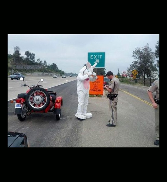 speeding ticket for Easter bunny