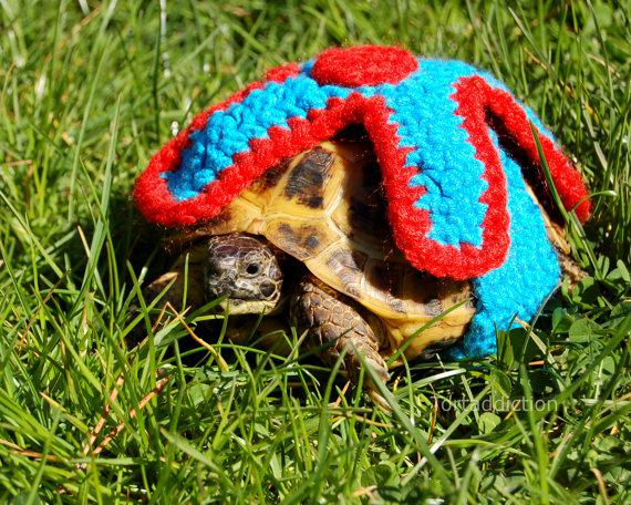 Knit Turtle Clothing