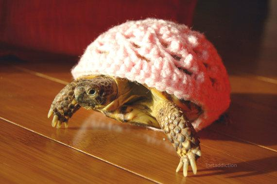 Keep your pet turtle warm