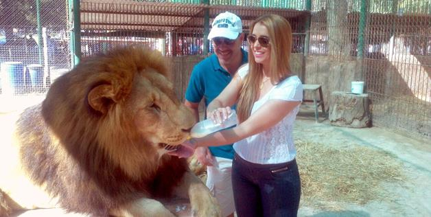 Feeding the lion