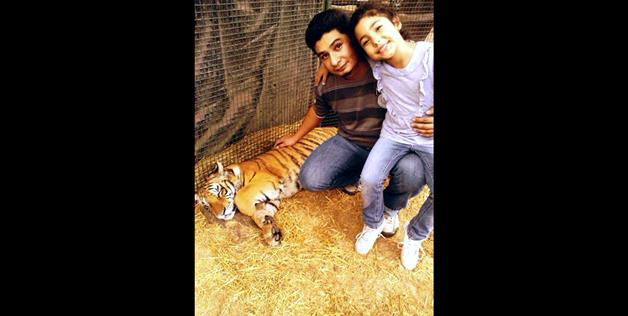 taking a photo with a tiger