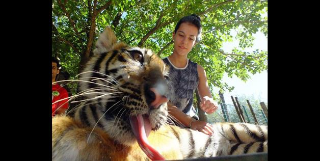 Photos with tiger