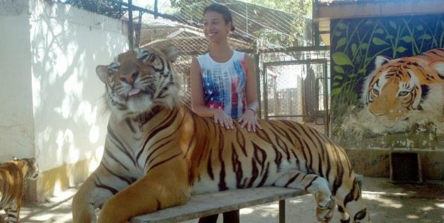photo with giant tiger