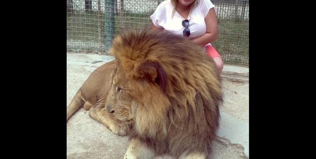 photo with lion