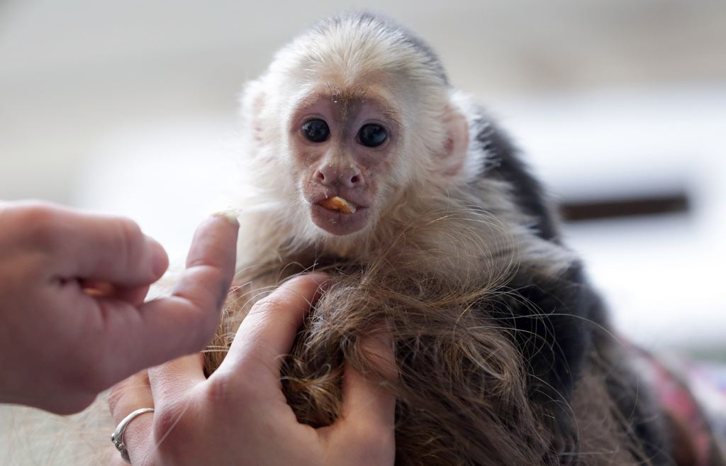 Justin Bieber Has Monkey Troubles