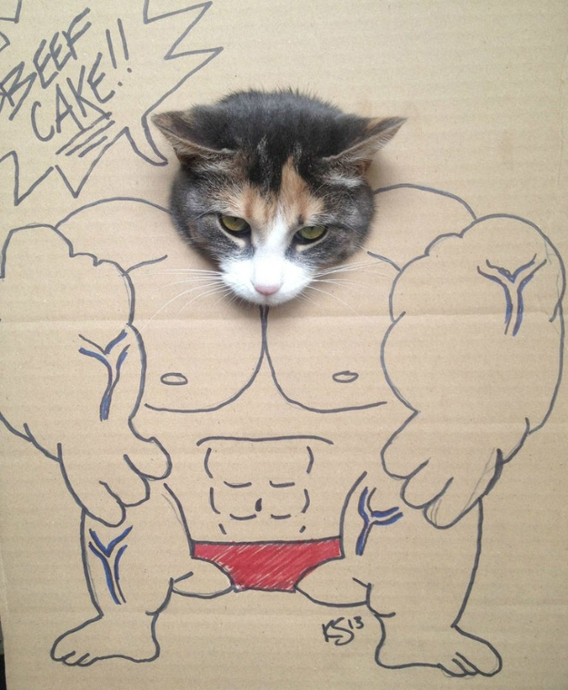 Muscle Cat