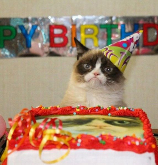 Grumpy Cats Birthday