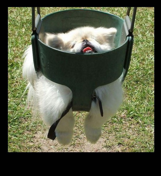 Dog swing fail