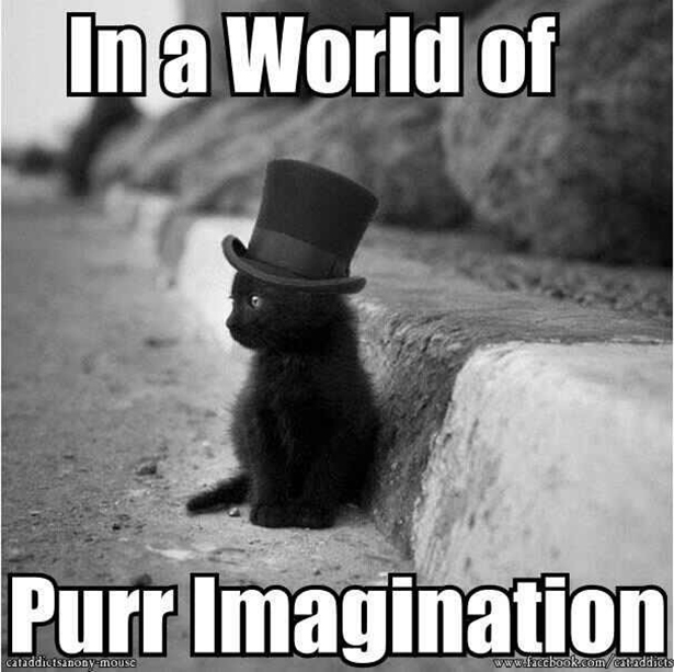 Willy Wonka Cat