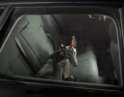 Pictures of Lonely Dogs Left in Cars