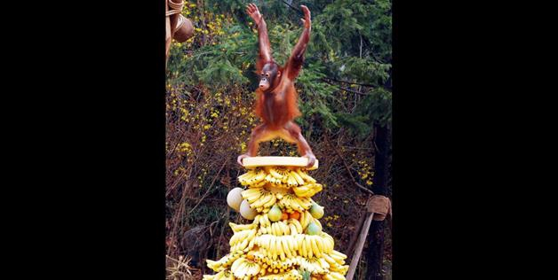 King Of The Bananas