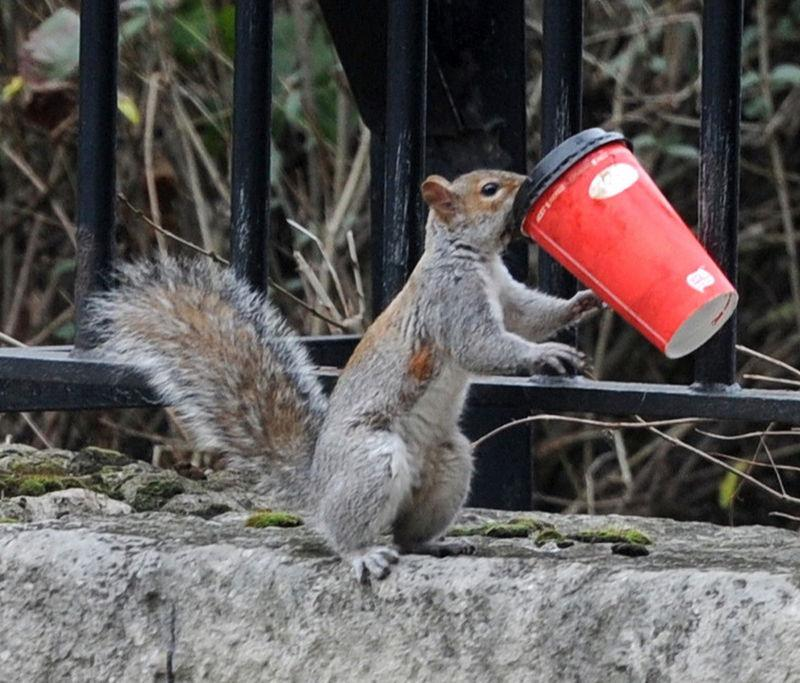 And More Squirrels Coffee Addicts:)