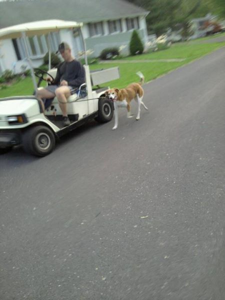This guy is too lazy to actually WALK the dog