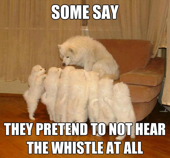 Meme Watch: Storytelling Dog Is A Raconteur Among Mere Dogs