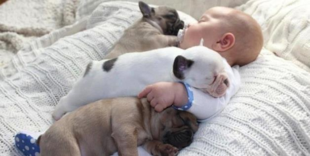 Cutest Pictures Ever? Baby Cuddles With French Bulldog Puppies