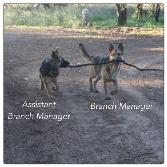 Dogs Branch Manager