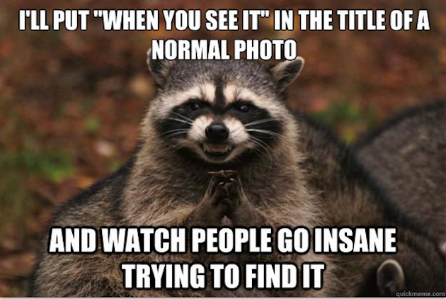 Best of the Evil Plotting Raccoon Meme