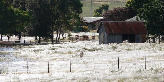 It looks like a quaint frost spreading over the Australian countryside. Wait till you find out what it really is.