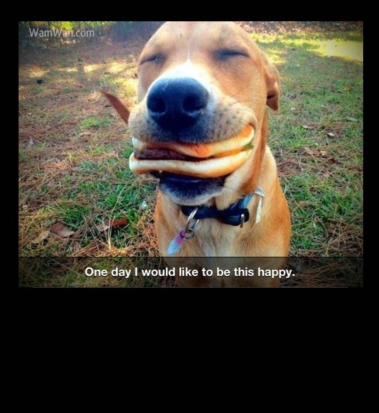 Happy burger Dog