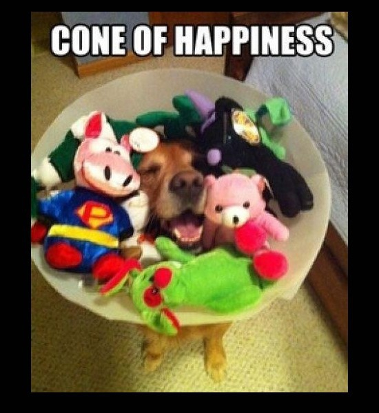 Happy cone dog