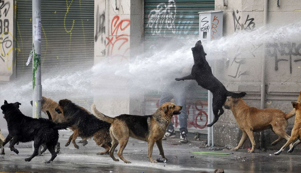 A student protester (rear) takes cover from a jet of water released by a riot police vehicle as a dog jumps
