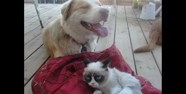 Dogs In Love With Cats Who Are Getting Rejected