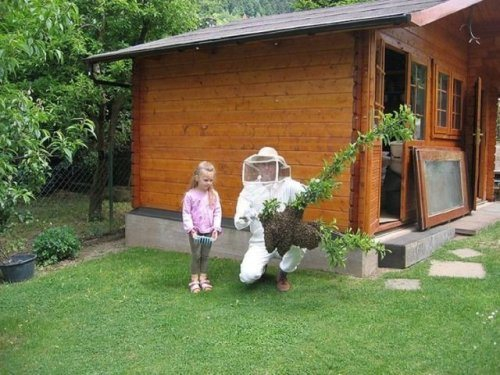 planting in a bee suit