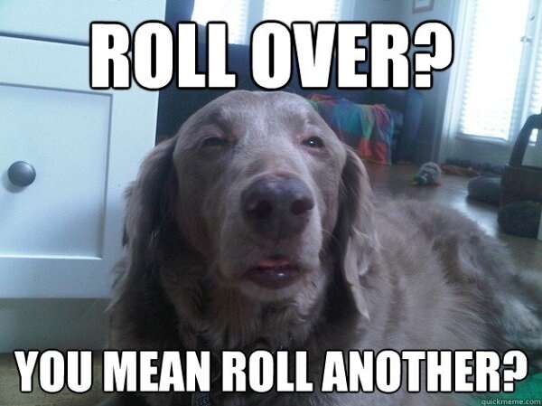 10 Dog Is The Newest Addition To The Stoner Dog Pantheon