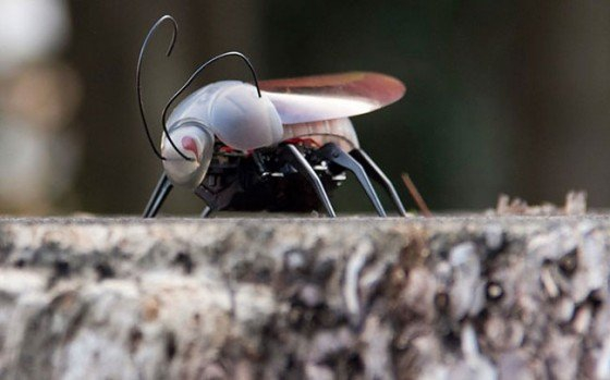 Now You Can Make Insects Fly From Your iPhone