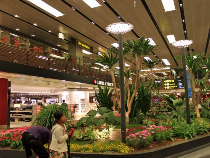 Greenery at Changi Airport