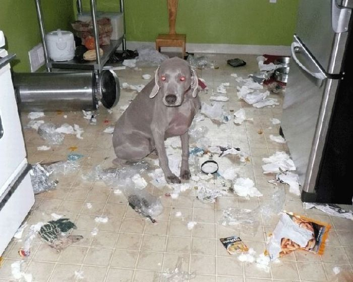 Dogs vs. Your House!