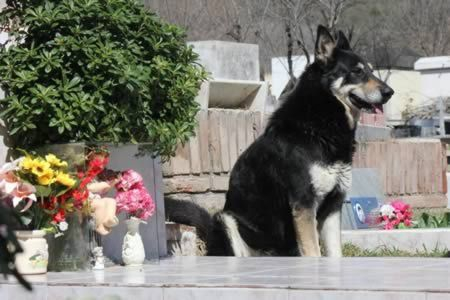 The dog that ran away from home to find his dead master's grave - and has stayed by its side for six years