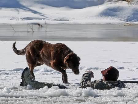 The loyal dog who waited 30 minutes for master to be rescued from freezing river