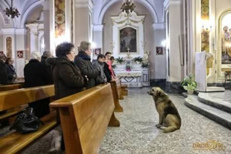The dog who attends mass every day at church where owner's funeral was held