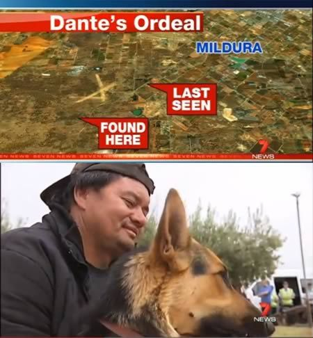 The dog who guarded a two-year-old who went missing in the Australian bush for fourteen hours