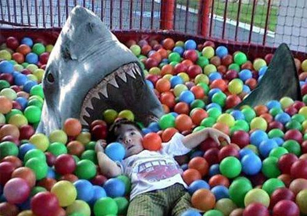 Shark in the ball pit
