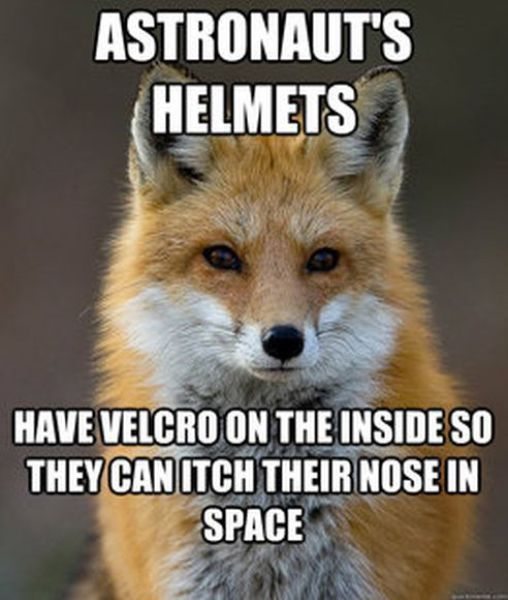 Get Your Fact Fix with This Great Fox Meme