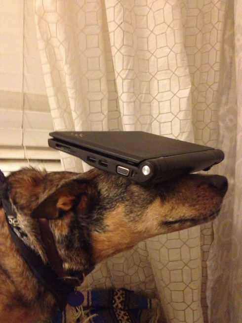 Adorable Dog Balances All Types of Objects on His Head