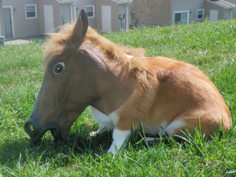 Adorable Pets Wearing The Notorious Horse Mask.
